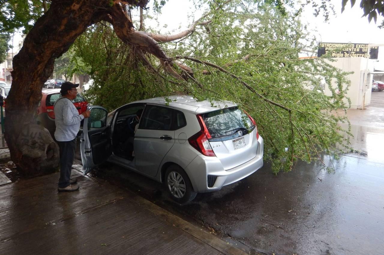 Le caen ramas de un árbol a automovil estacionado