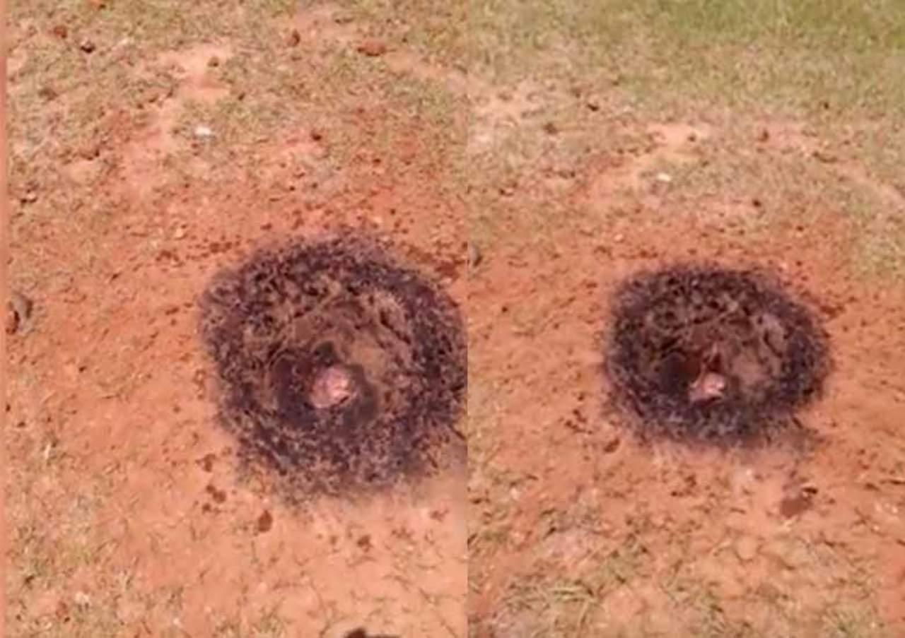 Hombre encuentra meteorito en llamas en su patio