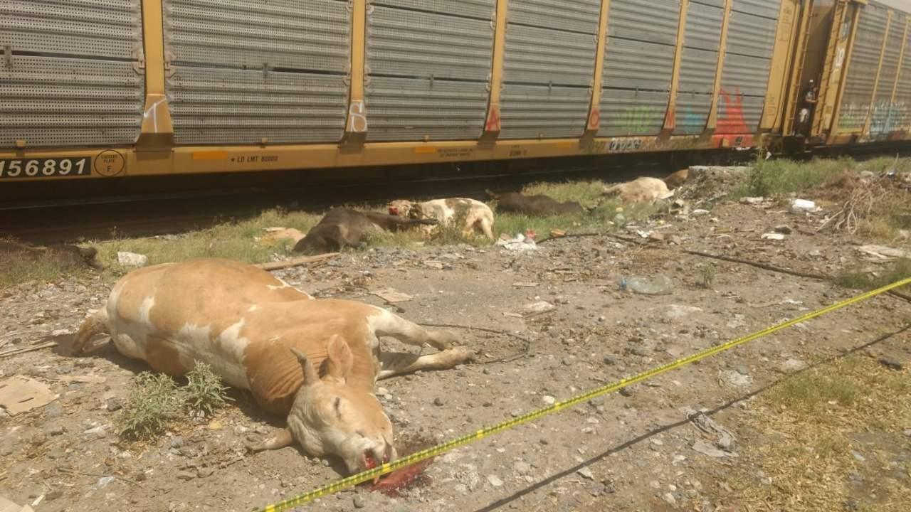 Tren impacta tráiler cargado con ganado