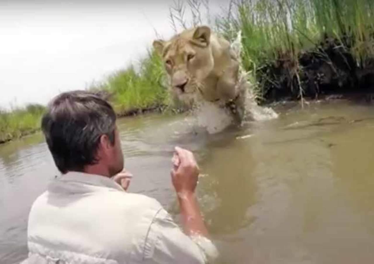Reacción de león al ver a su rescatista se hace viral