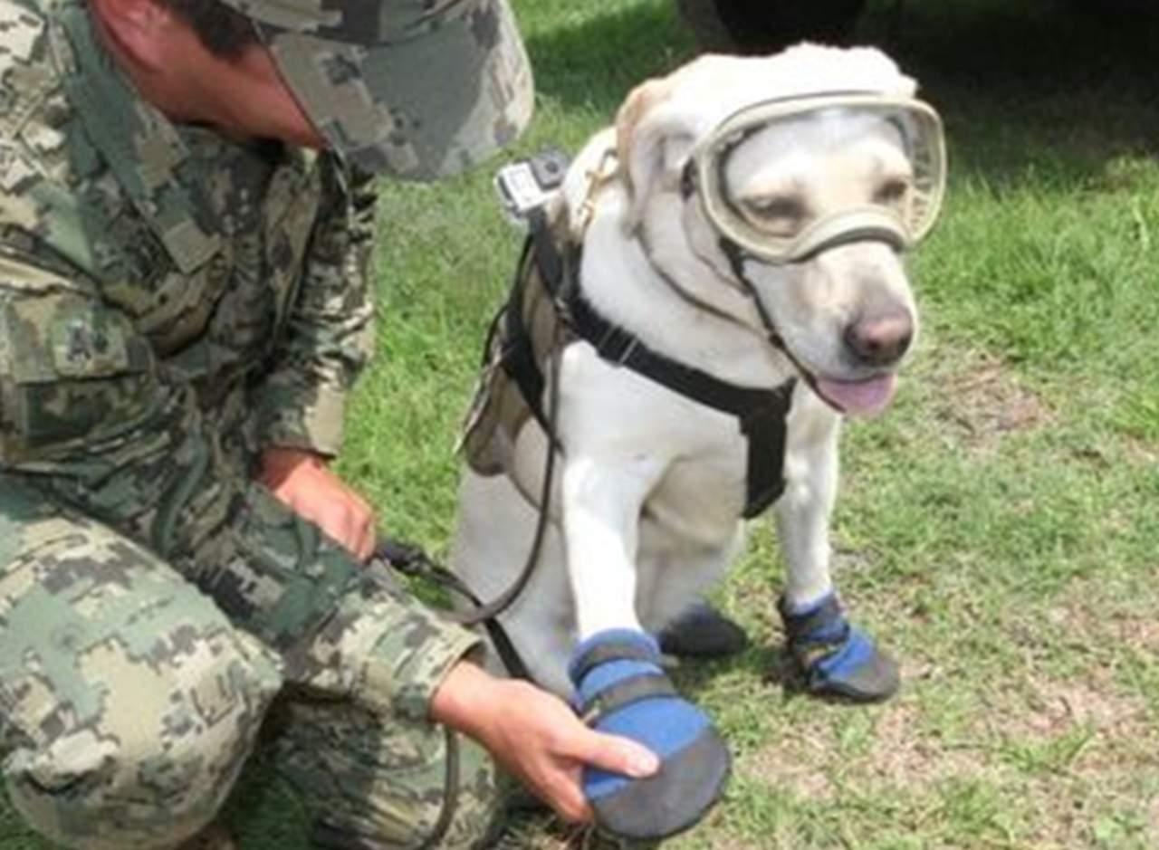 Frida, la perrita que ha ayudado a rescatar a varios sobrevivientes