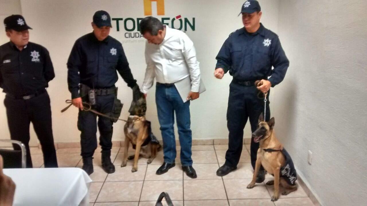 Harán reconocimiento público a rescatistas caninos y humanos