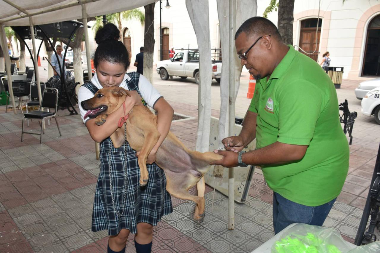 Esterilizan a mascotas de Lerdo