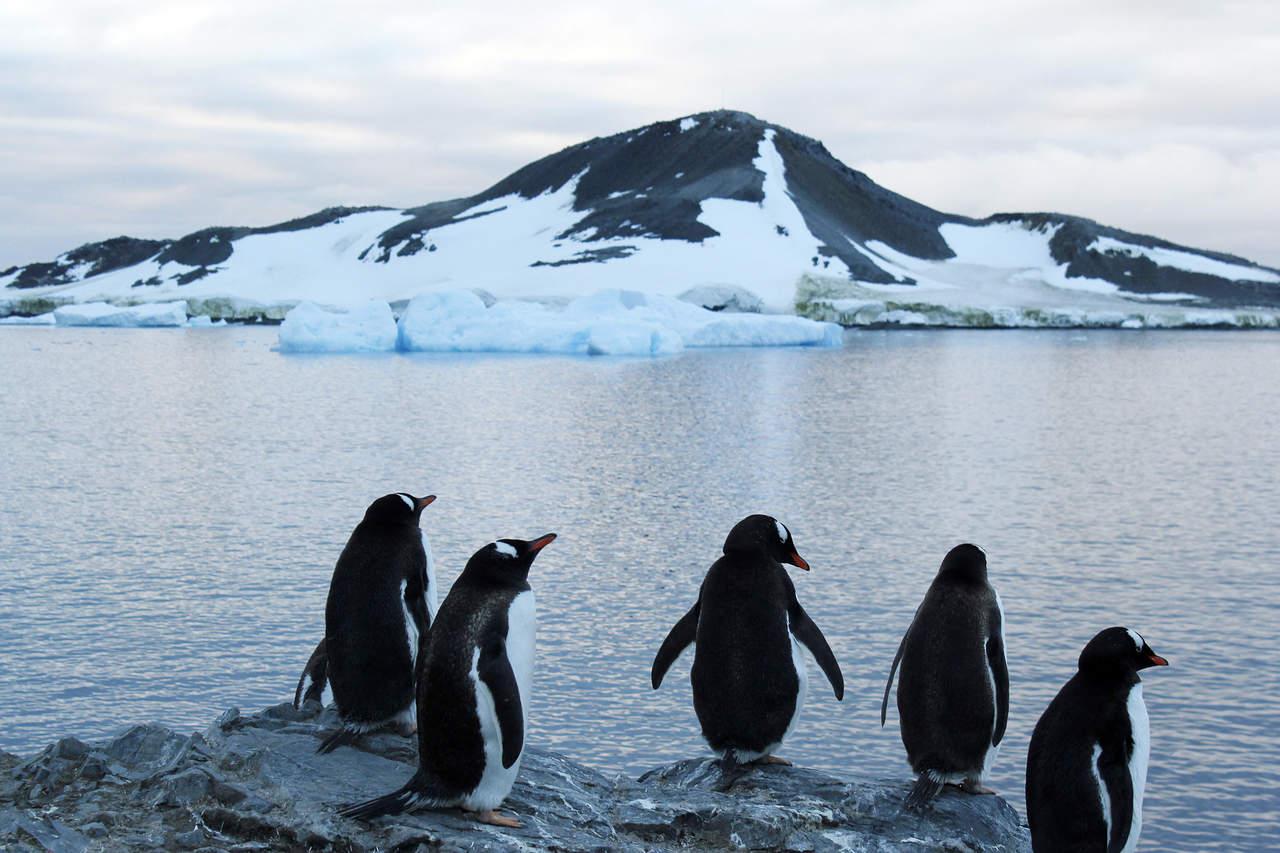 Pide WWF crear área protegida tras muerte masiva de pingüinos en la Antartida