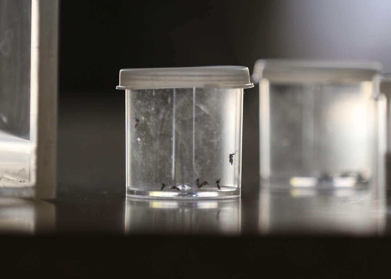 Prevén alza de dengue por cambio climático