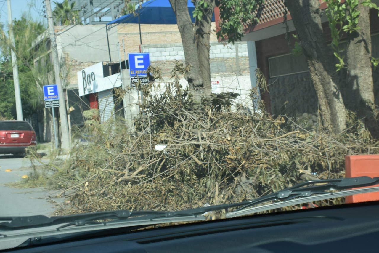 Nadie recoge ramas en calle