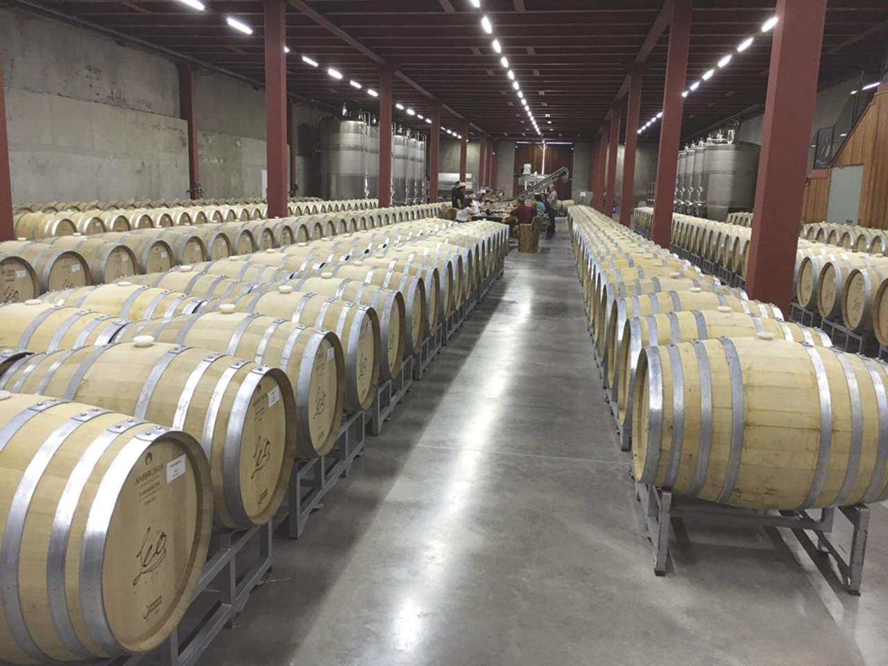Parras, el viñedo original