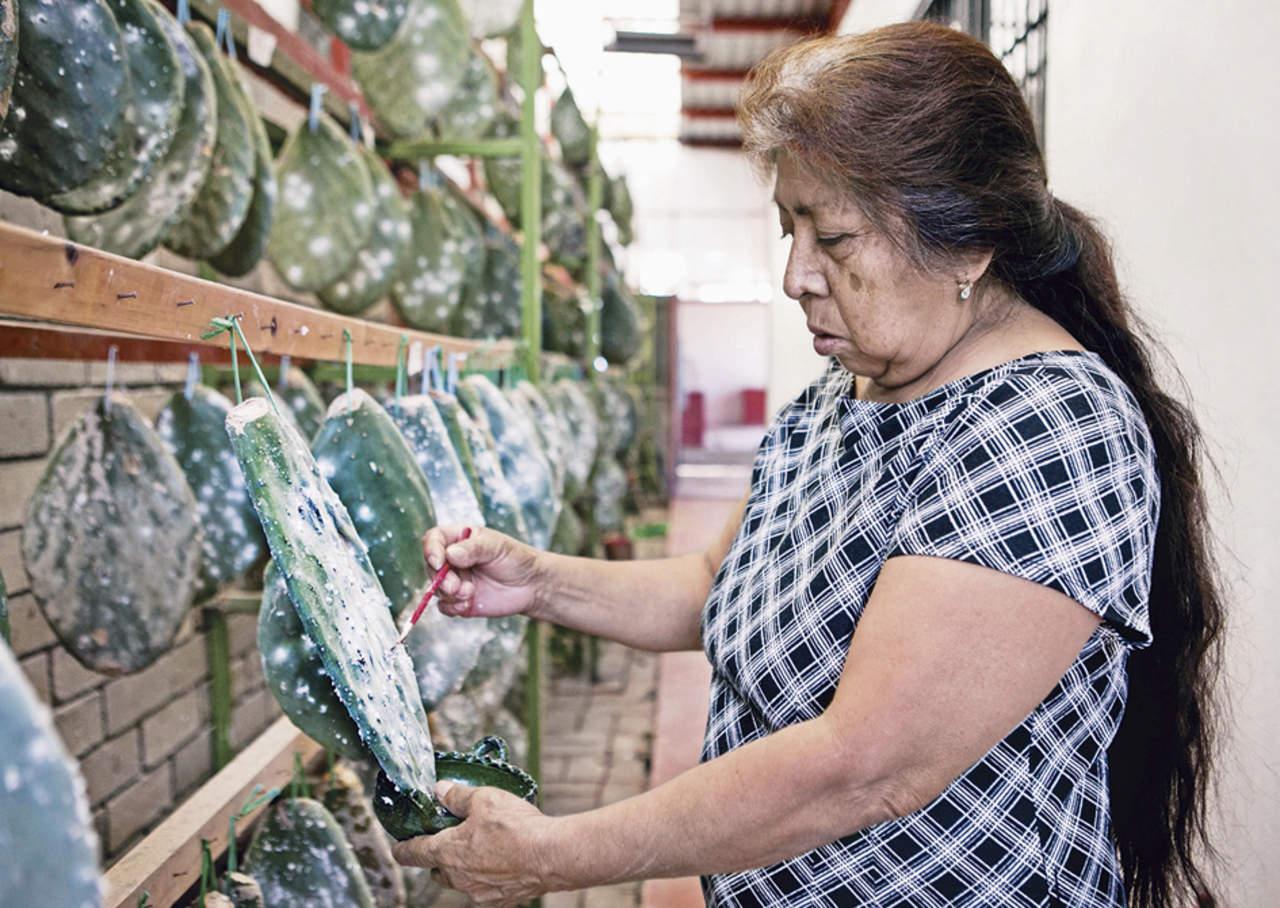 Grana cochinilla, color prehispánico