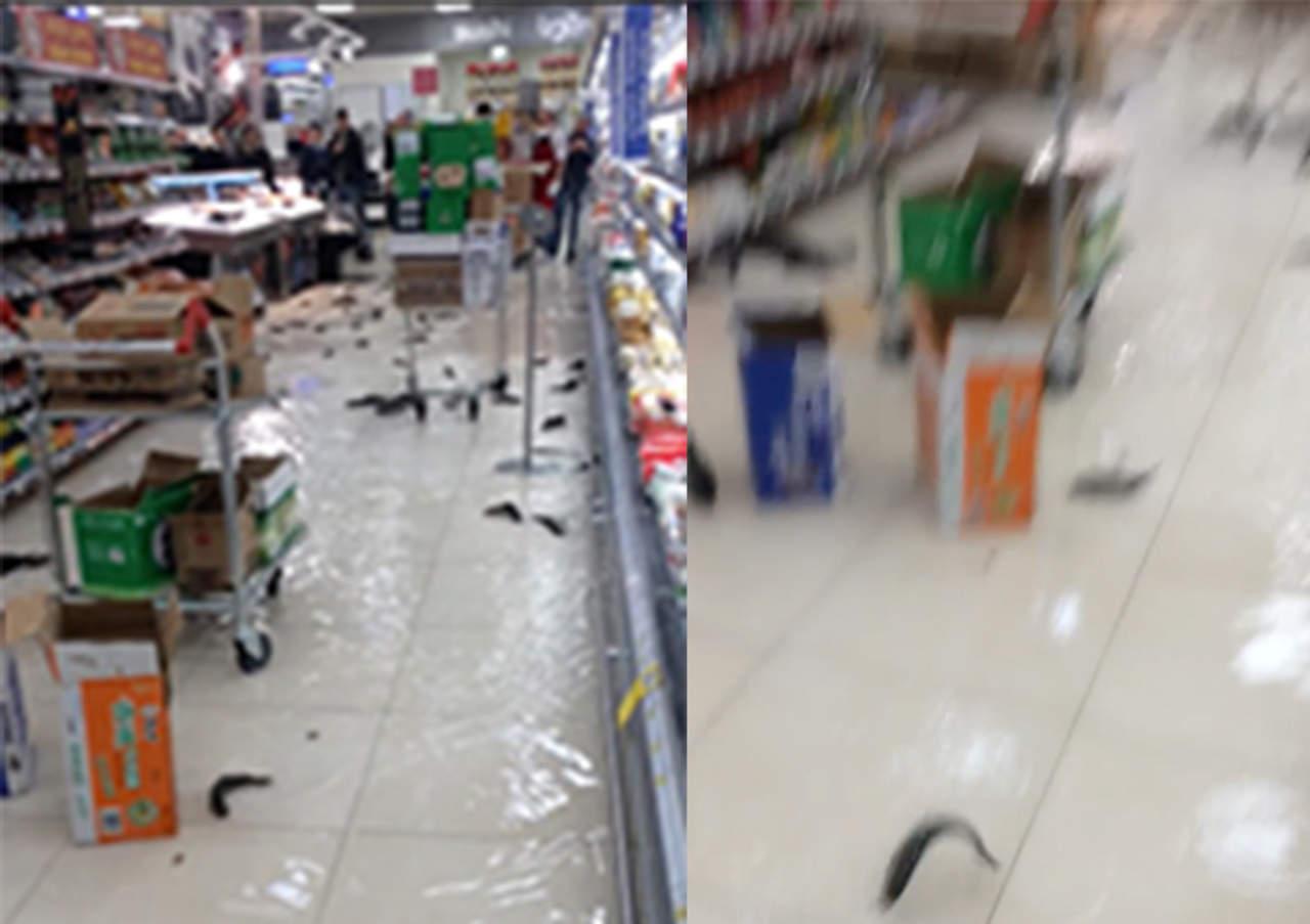 Peces vivos invaden pasillos de supermercado