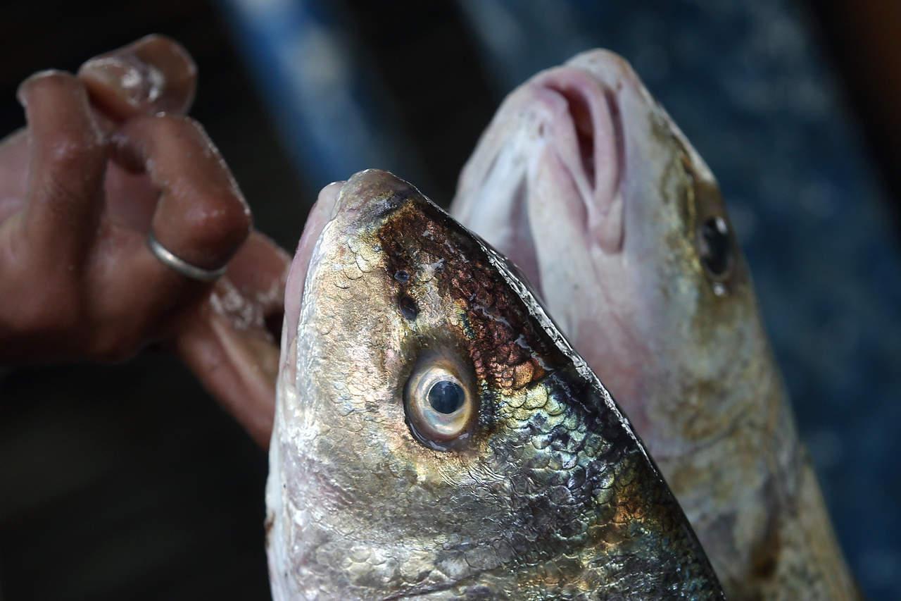 Mexicanos fabrican productos con piel de pescado