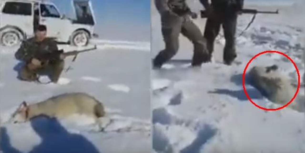 Lobo toma venganza contra sus cazadores