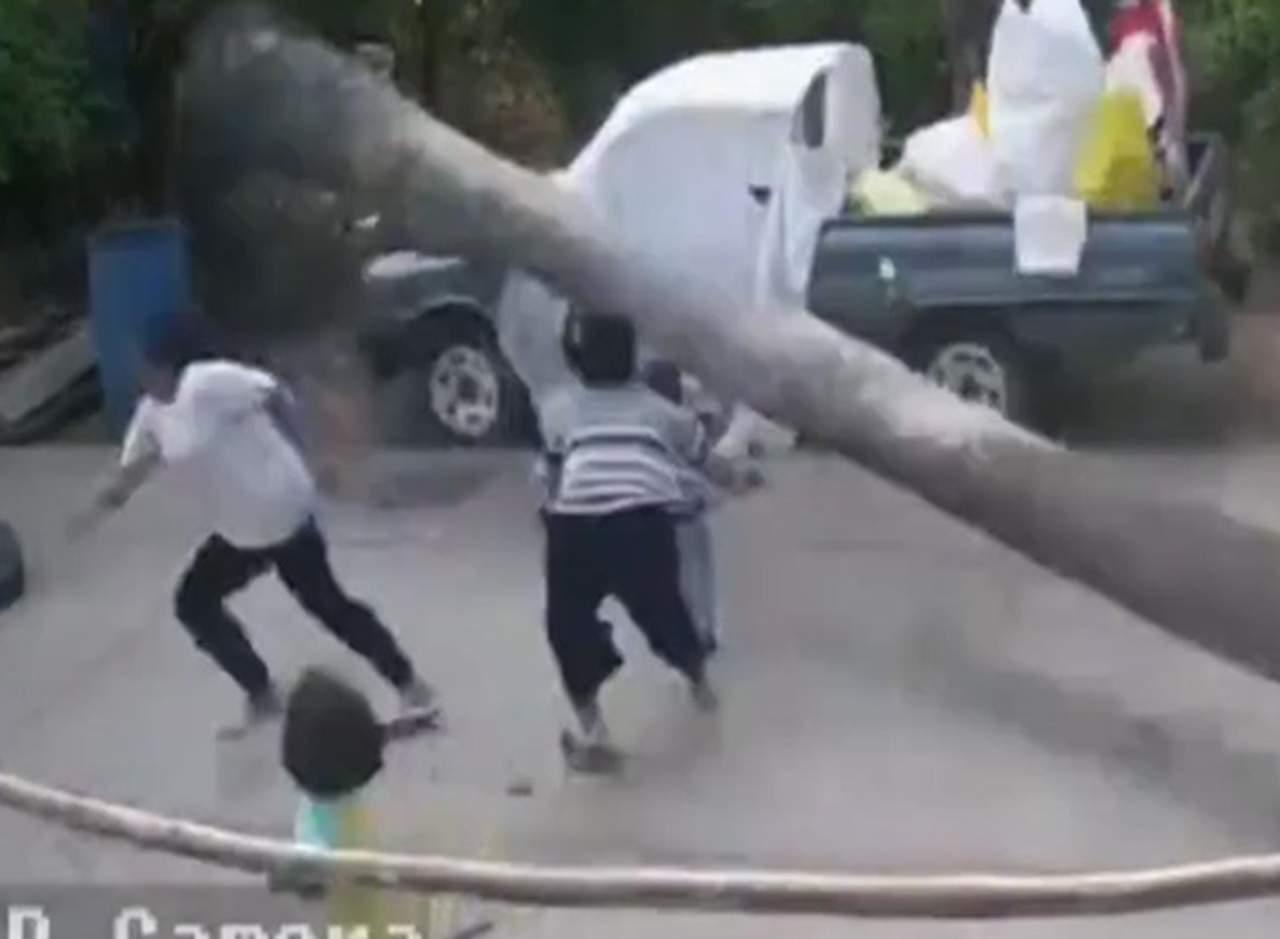 Niño se salva por milímetros de ser aplastado por una palmera