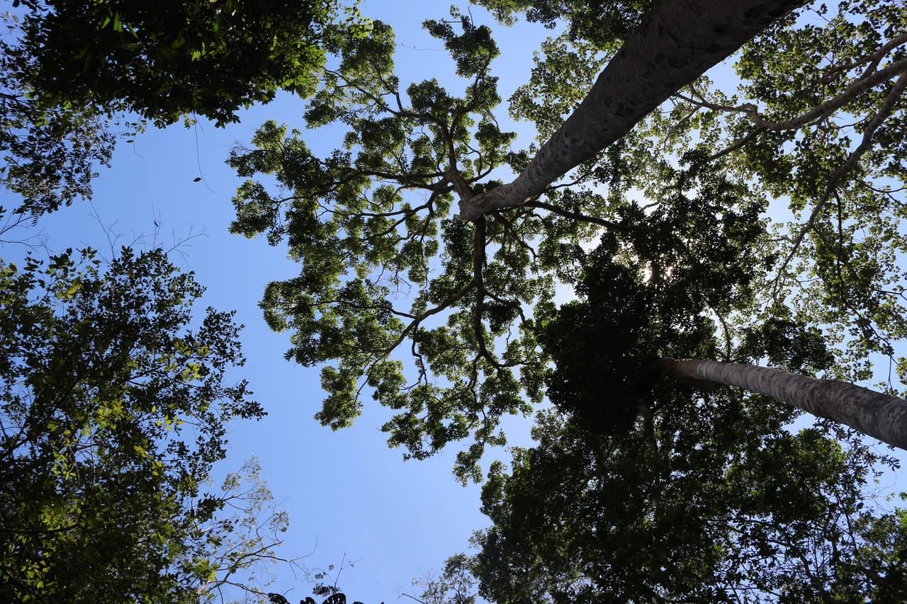 Mexicanos crean sistema para medir valor y volumen de bosques