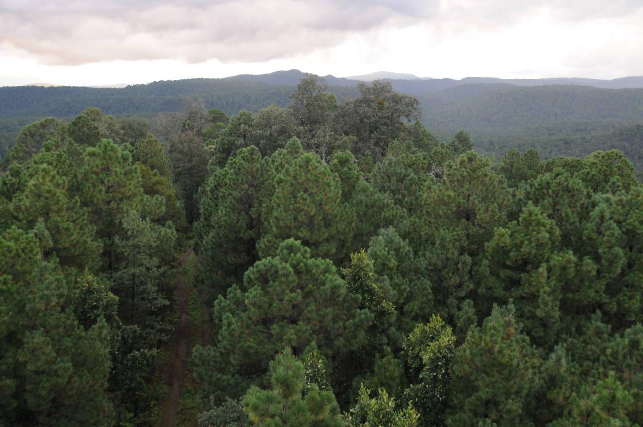 Durango, sede del Foro Forestal 2018