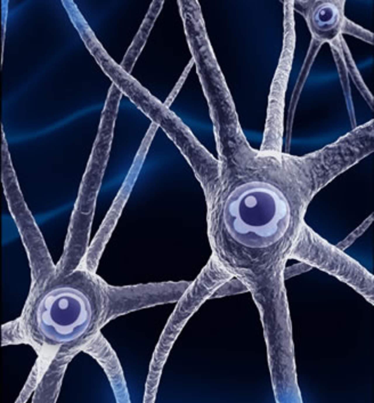Creación de neuronas decrece a medida que envejecemos
