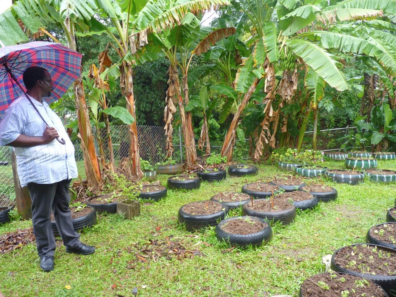 México y la FAO contra el cambio climático en el Caribe