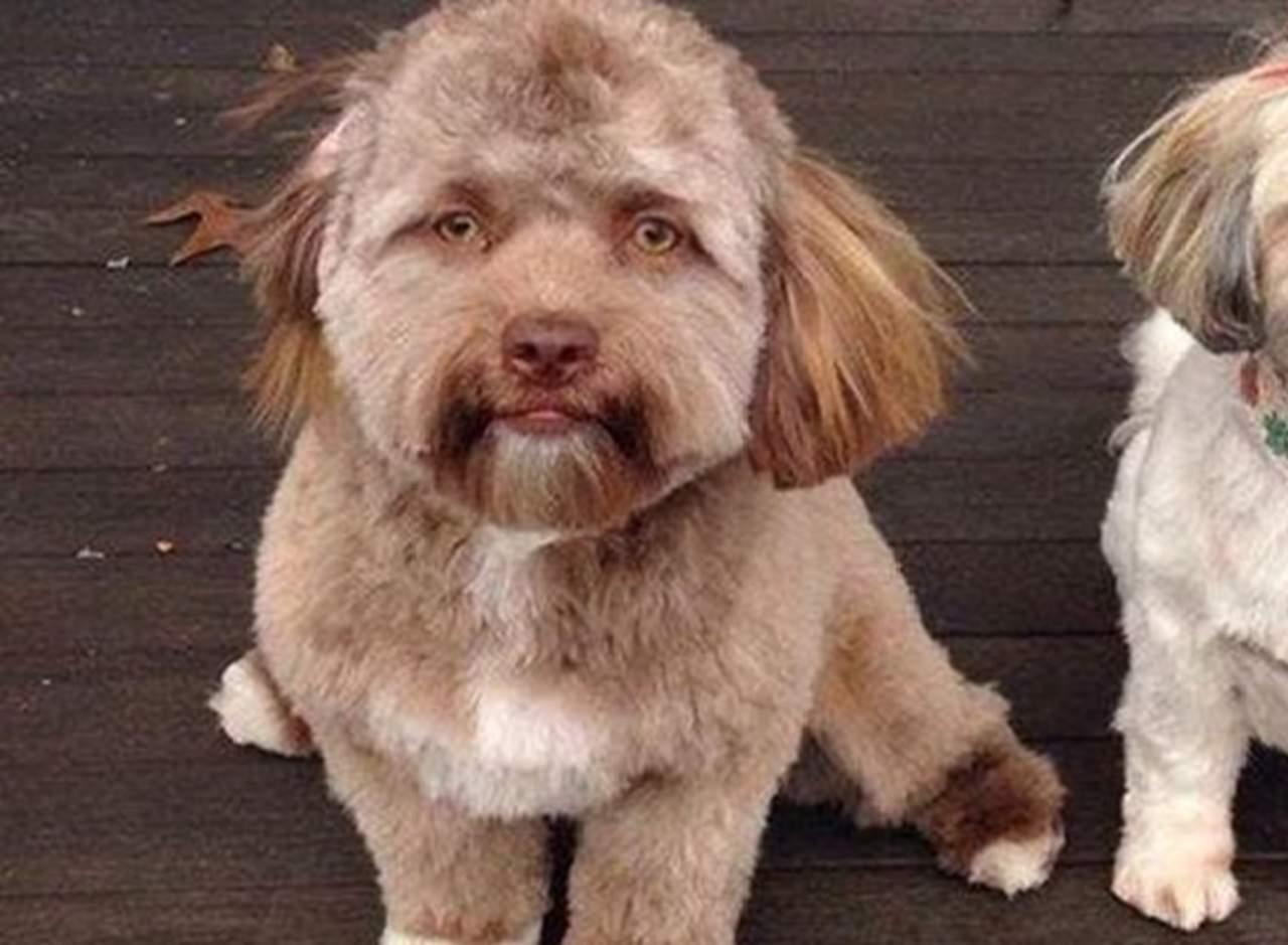 ¿Un perro con cara de humano?