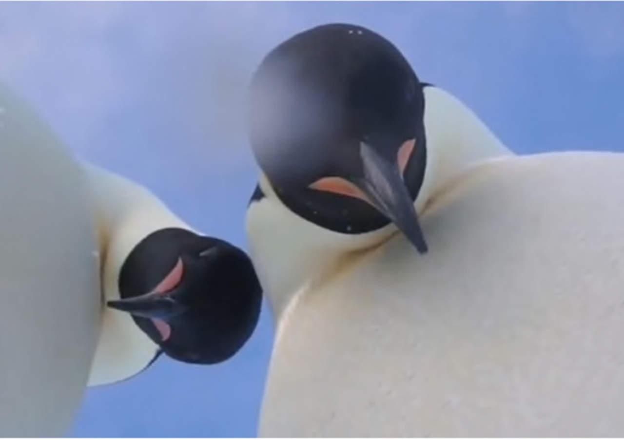Selfie de pingüinos se hace viral en la red