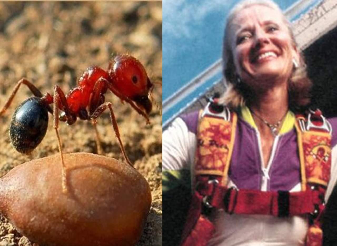 Hormigas de fuego salvan la vida a una paracaidista