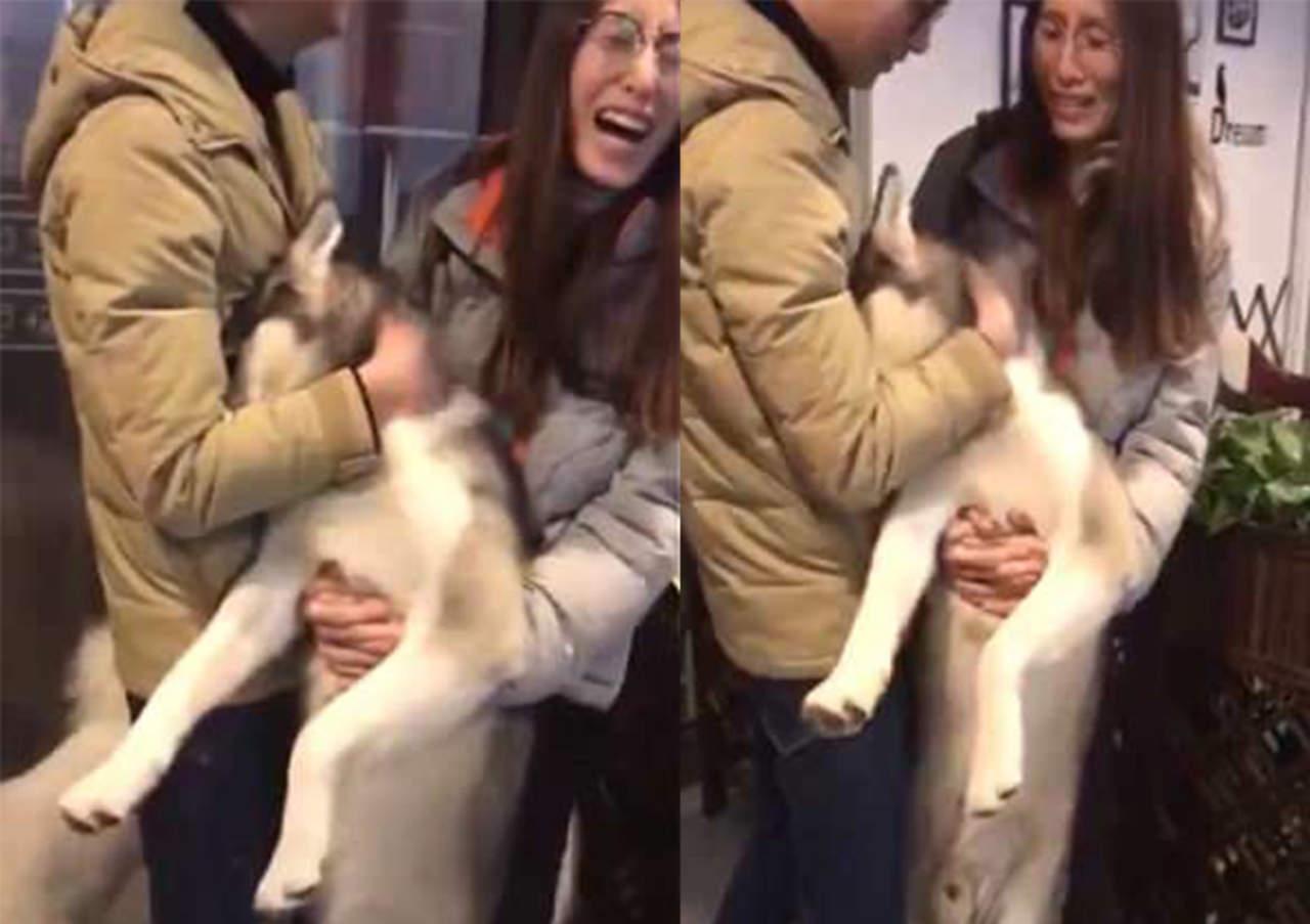 Husky llora en los brazos de su dueño tras ser rechazado