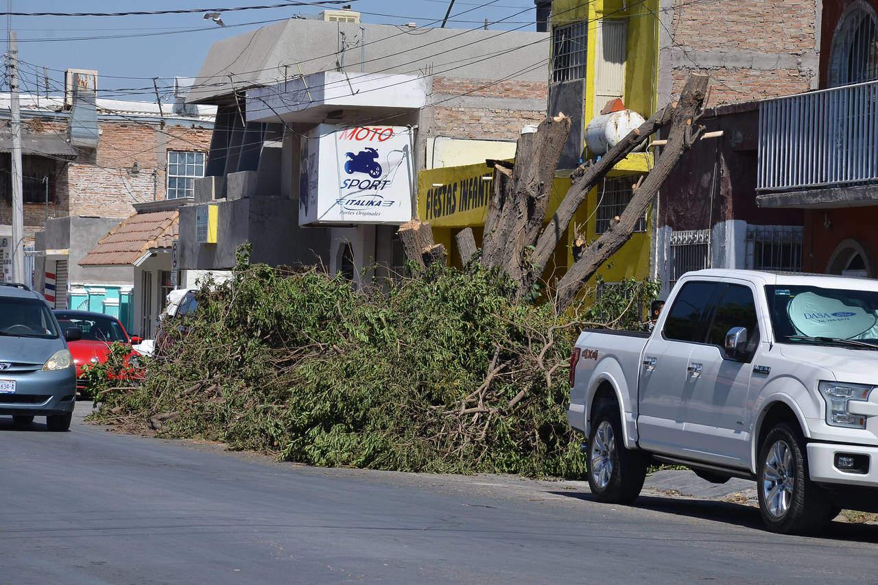 Dejan basura vegetal en calle