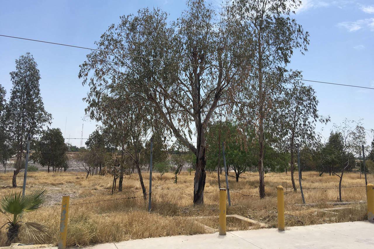 Abandonan área verde