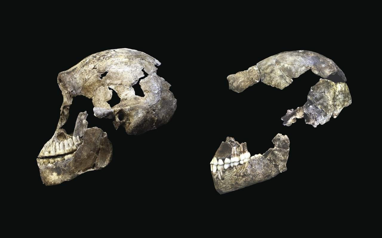 Homo naledi, con un cerebro similar al nuestro