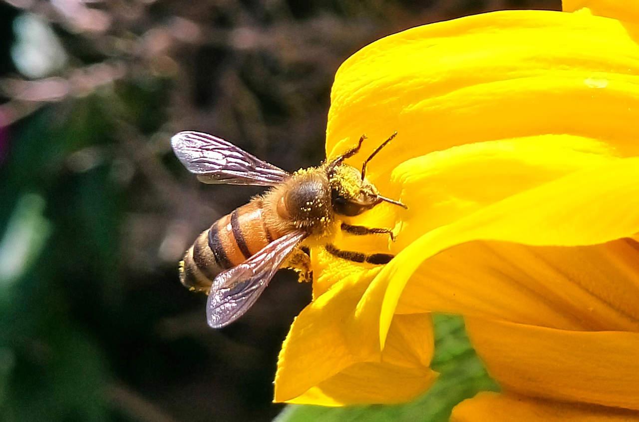 Las abejas identifican diferentes flores por patrones de olor