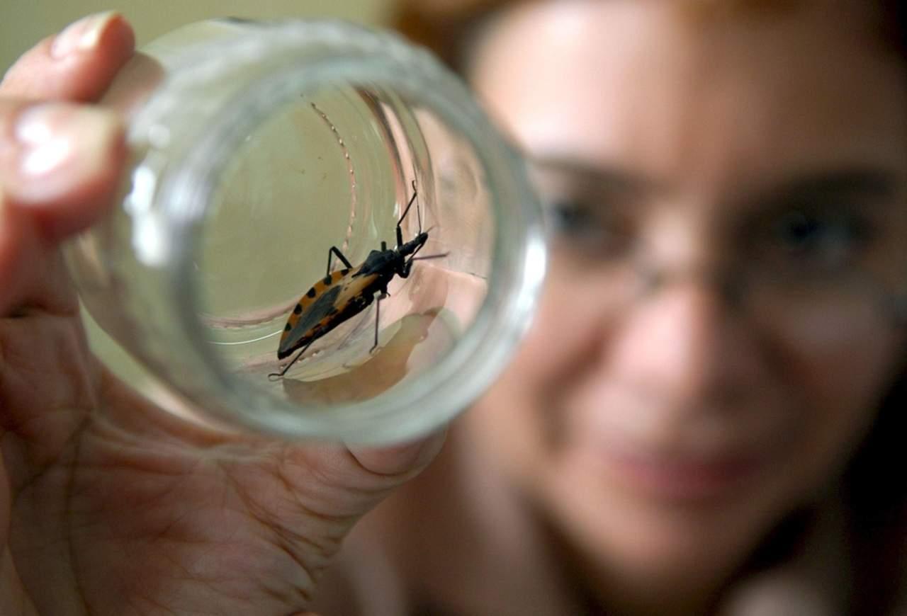Cepas mexicanas pueden transmitir la enfermedad de Chagas