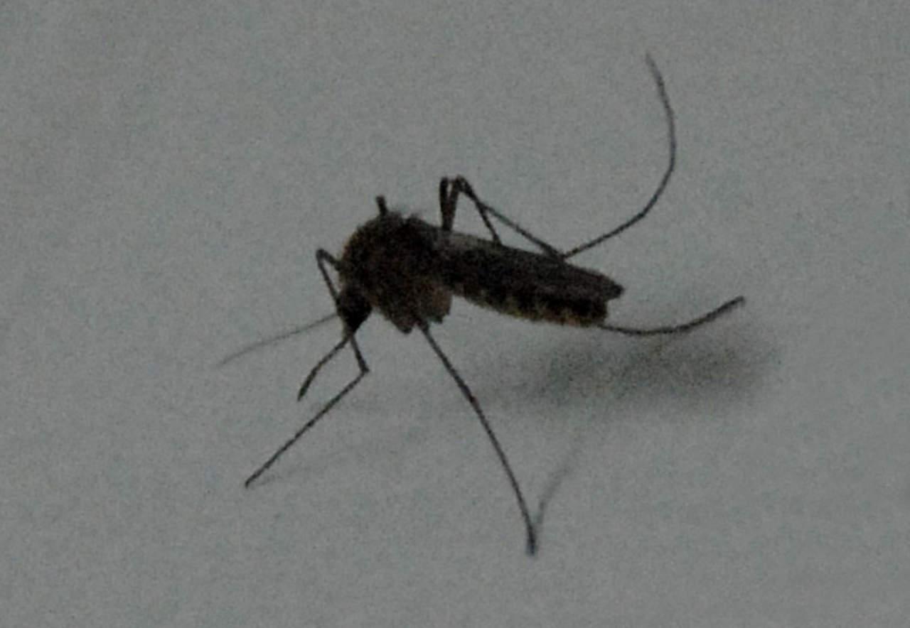 Reportan 2 casos sospechosos de dengue en Gómez Palacio