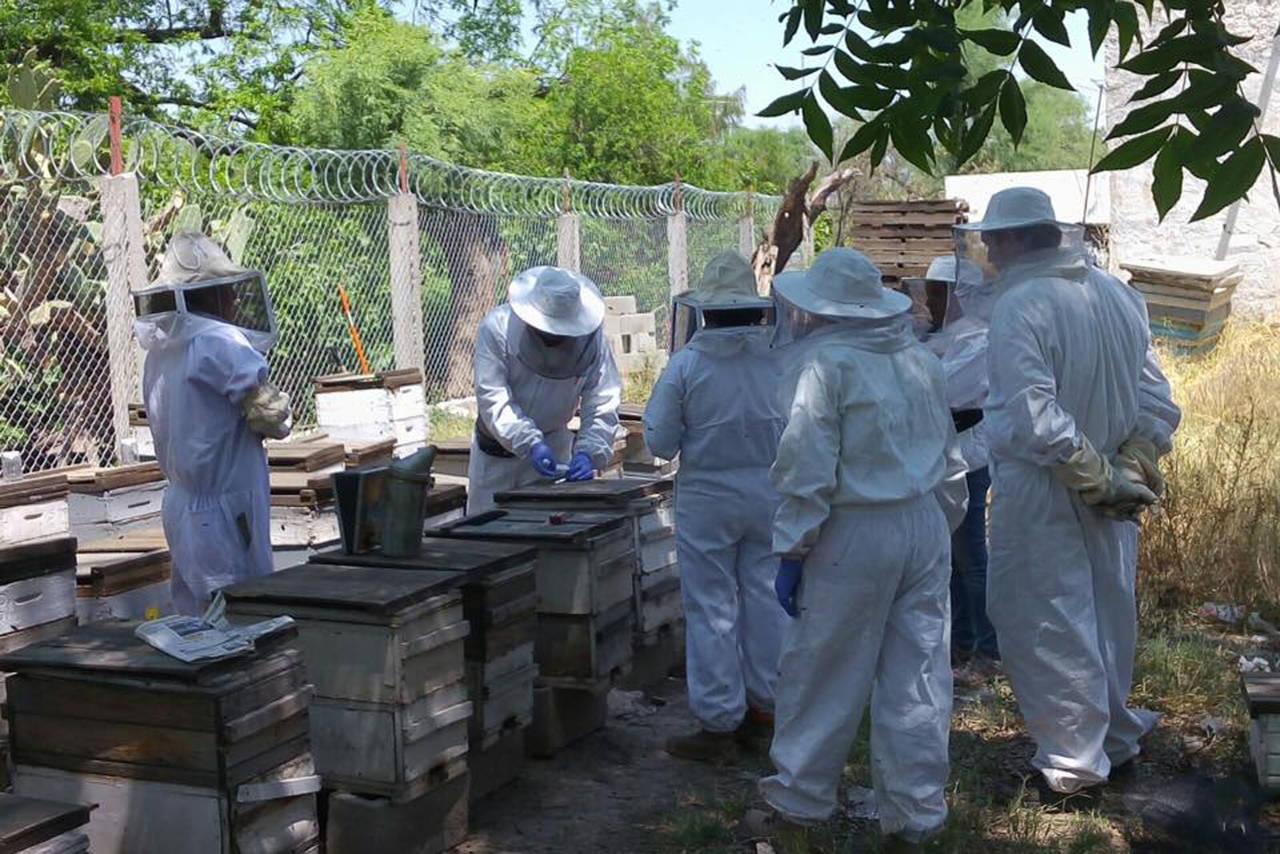 Entregan 480 abejas reina a apicultores