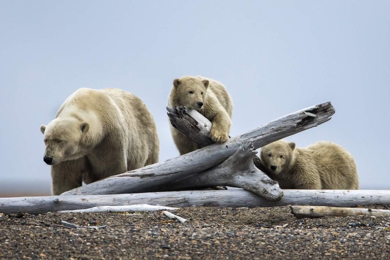 Temperatura del Pacífico repercute en el rápido calentamiento del Ártico