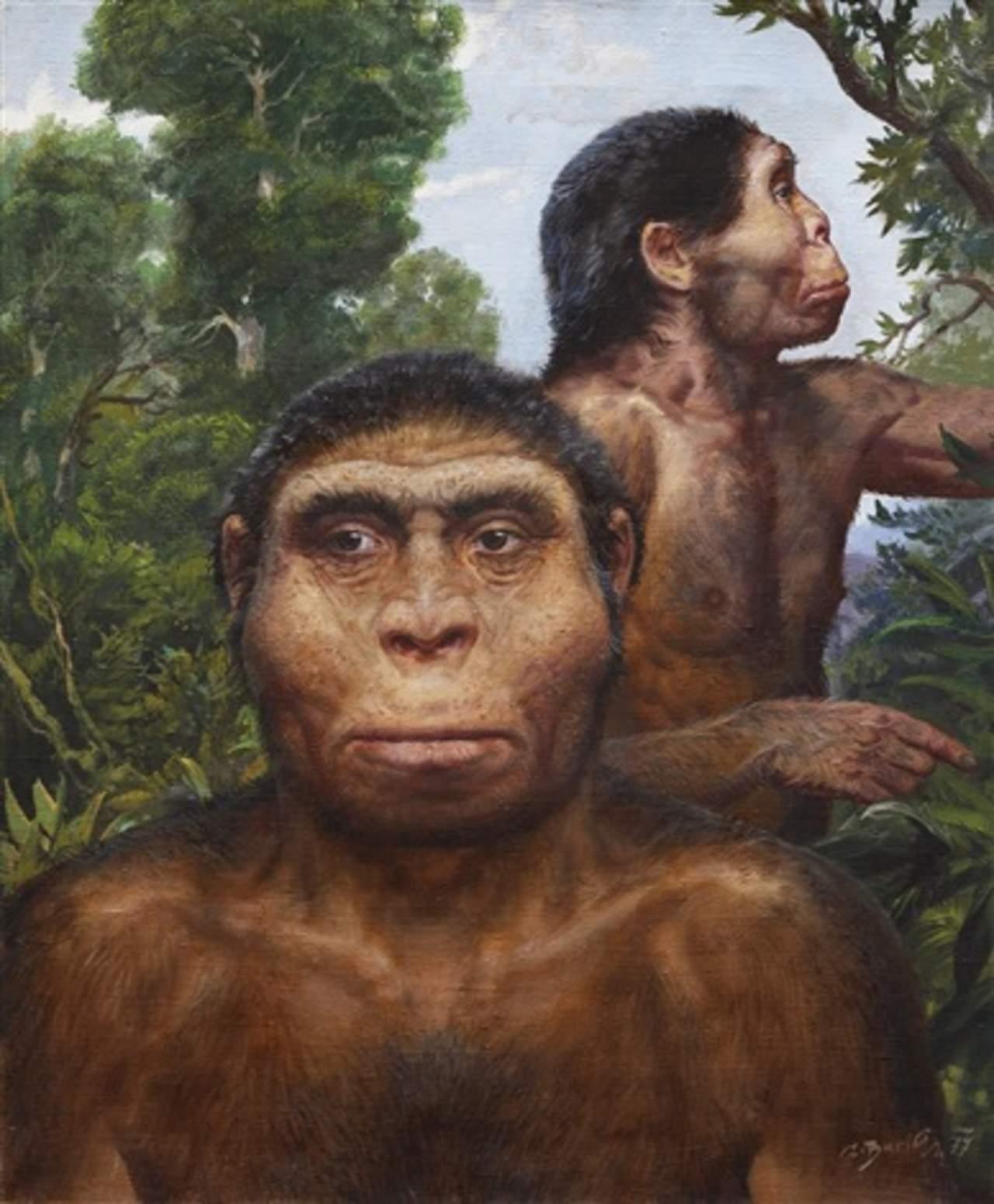 Pereza ayudó a la extinción del Homo erectus, según estudio