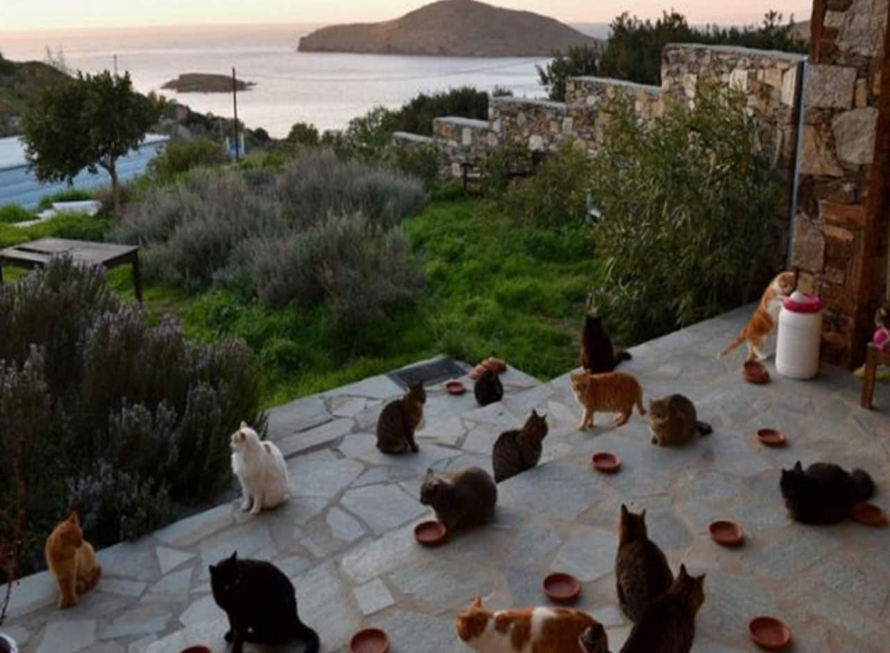 Cuidar 55 gatos en una isla griega y con salario fijo