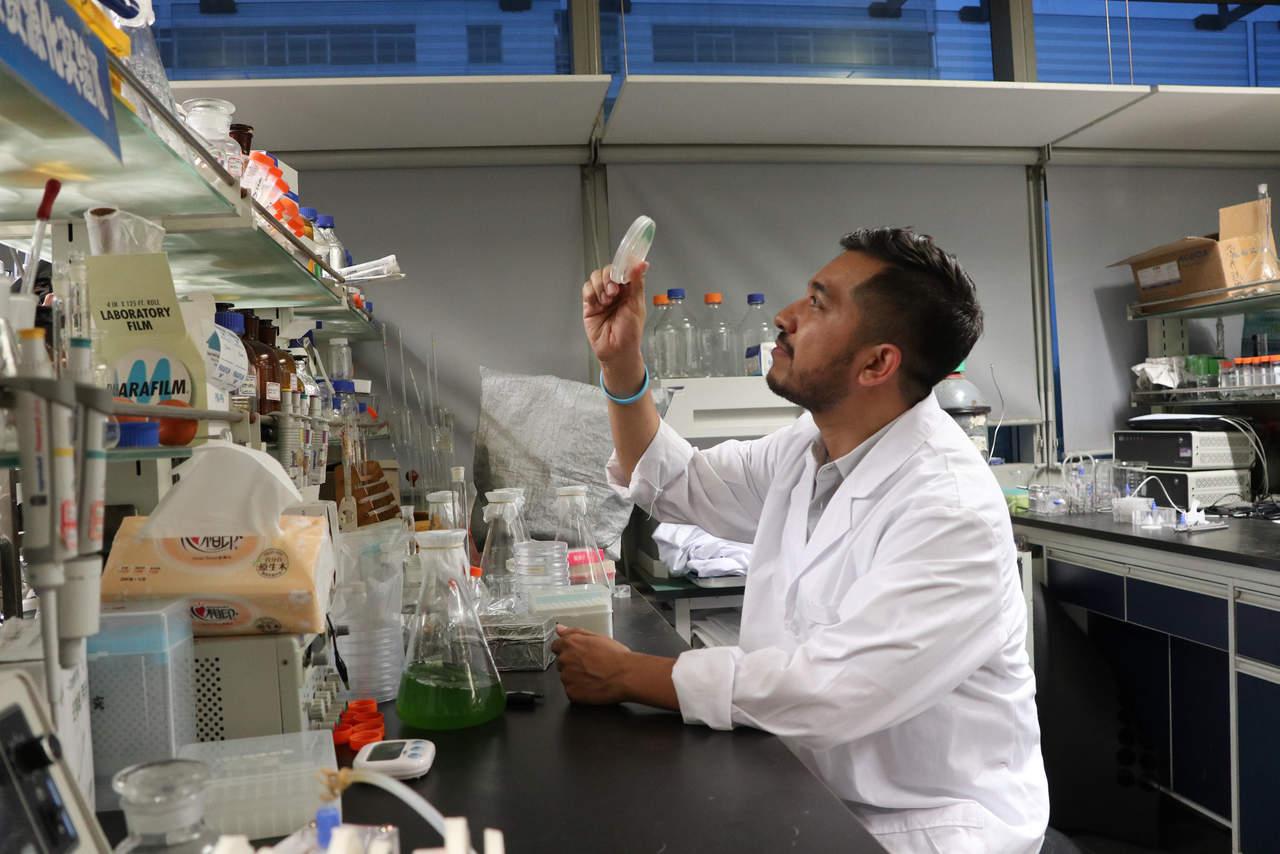 Microalgas, seres diminutos con diversas aplicaciones