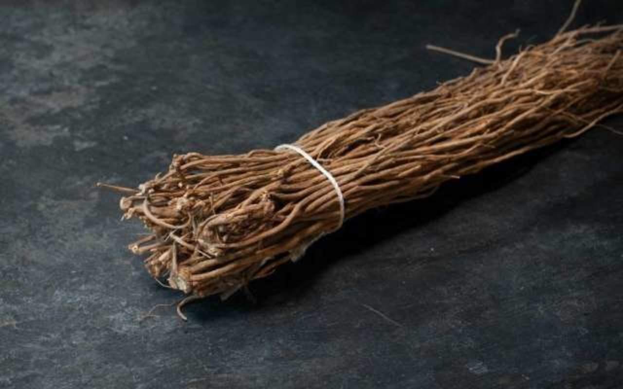Chilcuague, benéfica planta medicinal