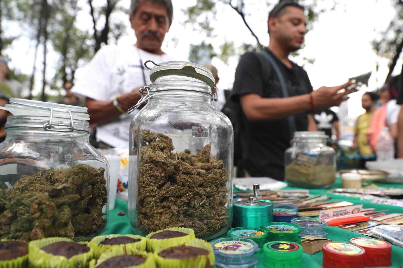 Puntos para conocer la propuesta de legalización de la marihuana en México