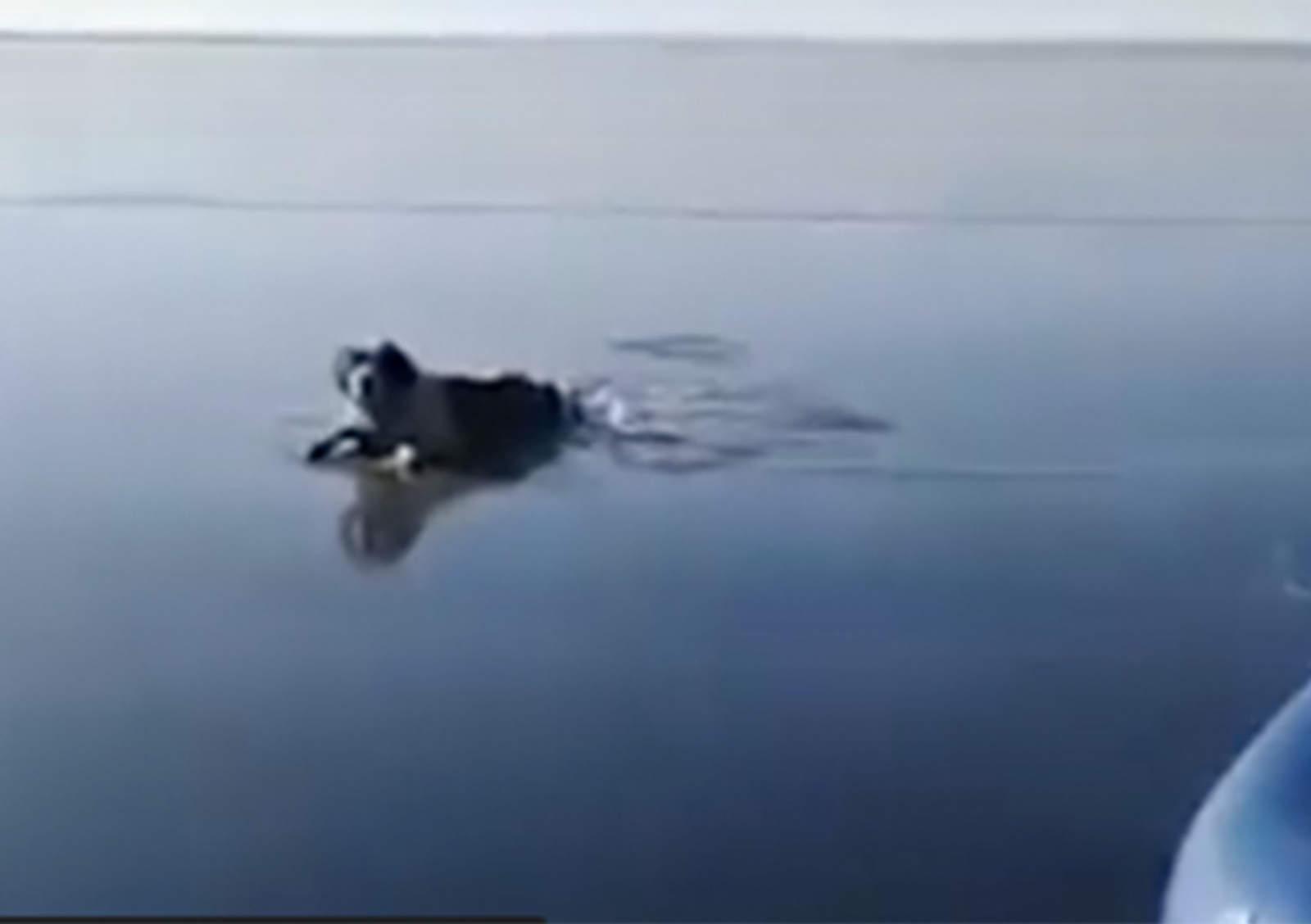 VIDEO: Rescatan a perro que quedó atrapado en hielo