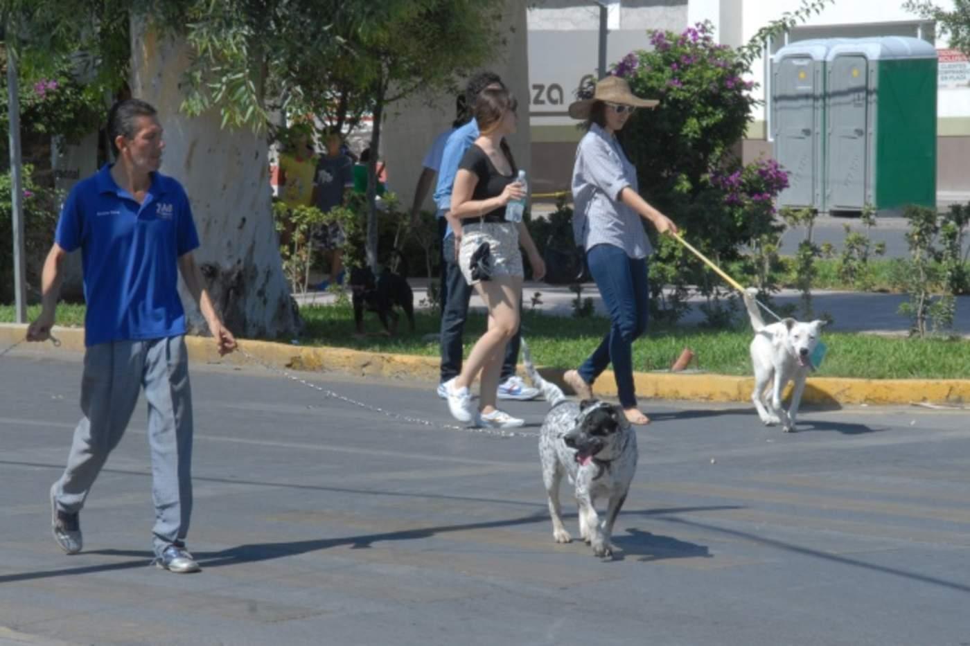 Lugares de La Laguna donde podrás pasear a tu mascota. (ARCHIVO)