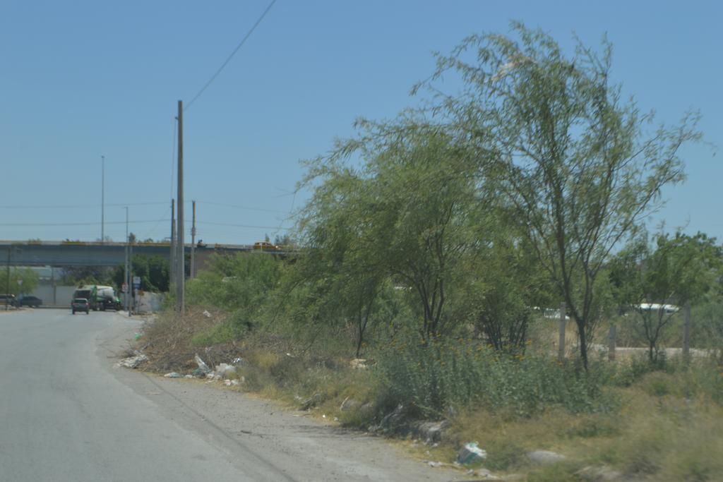 Se trata de al menos tres terrenos particulares que no cuentan con la poda y limpieza correspondiente. (EL SIGLO DE TORREÓN)