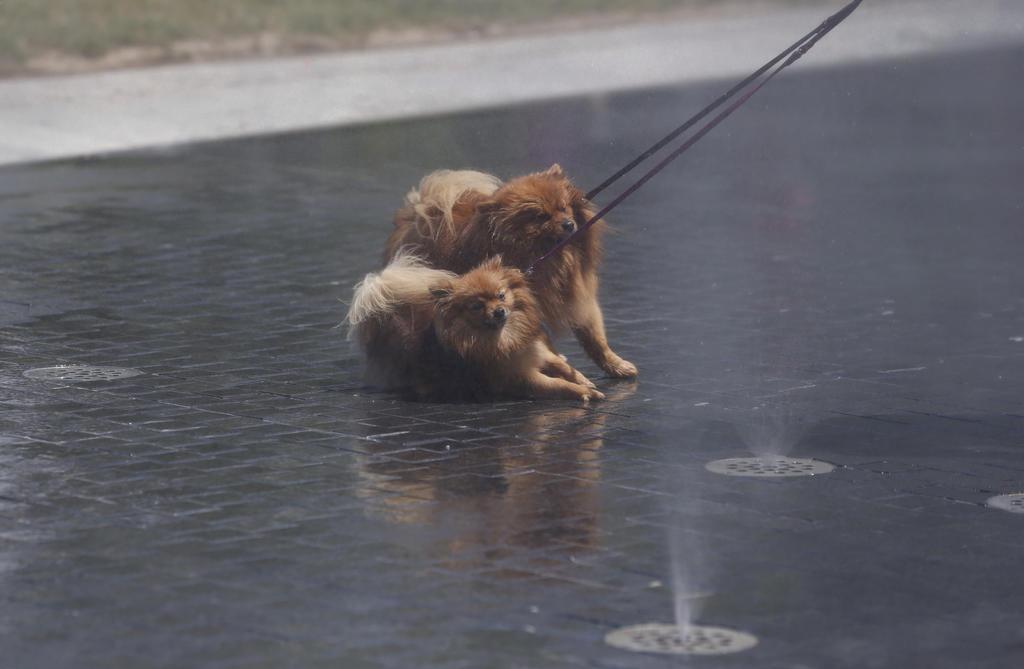 Exhortan a cuidar a las mascotas en esta temporada de calor. (ARCHIVO)