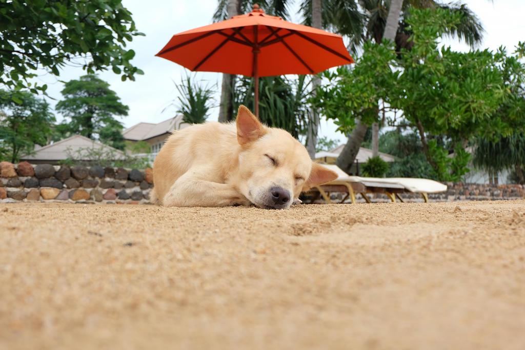 El estrés se puede presentar incluso por su convivencia con otros animales al salir de paseo o escuchar ruidos inusuales. (ARCHIVO)