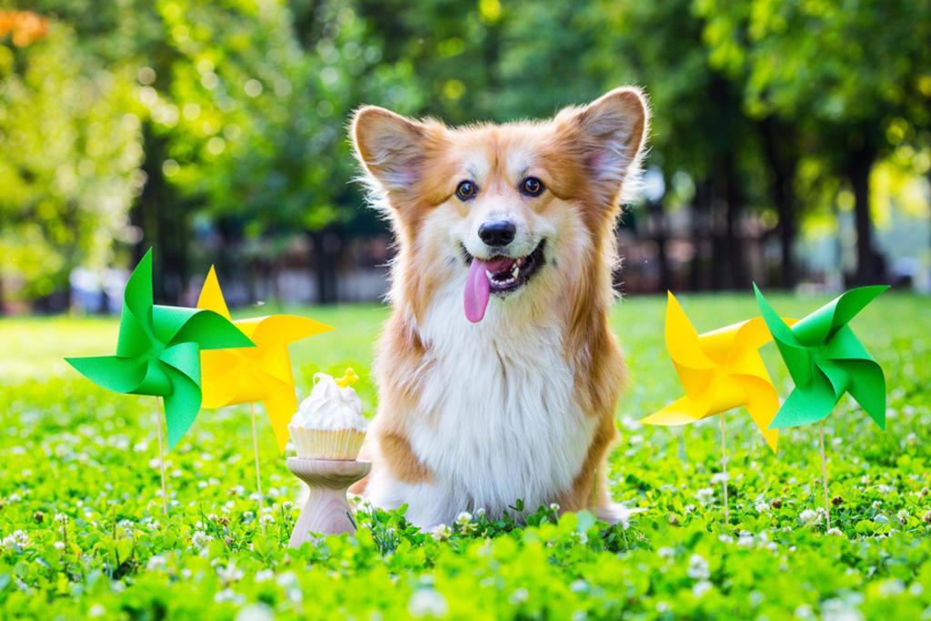 El 21 de julio es el día internacional del perro. (ARCHIVO)