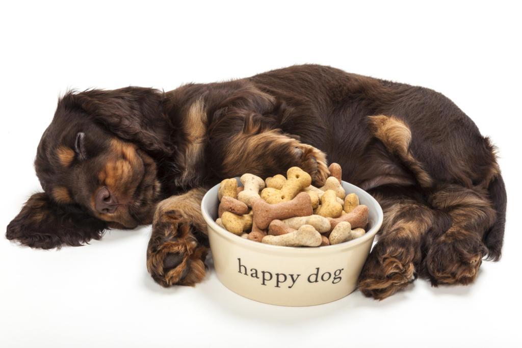 La limpieza es otro aspecto importante a cuidar en las mascotas, como baño, corte y cepillado. (ARCHIVO)
