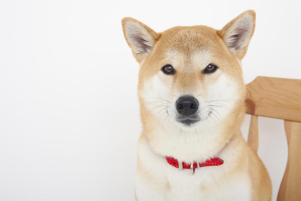 Los perros tienen un mecanismo que impide que desarrollen enfermedades priónicas, descubrimiento que puede ser clave para determinar nuevas terapias para combatir esa dolencia en humanos. (ARCHIVO)