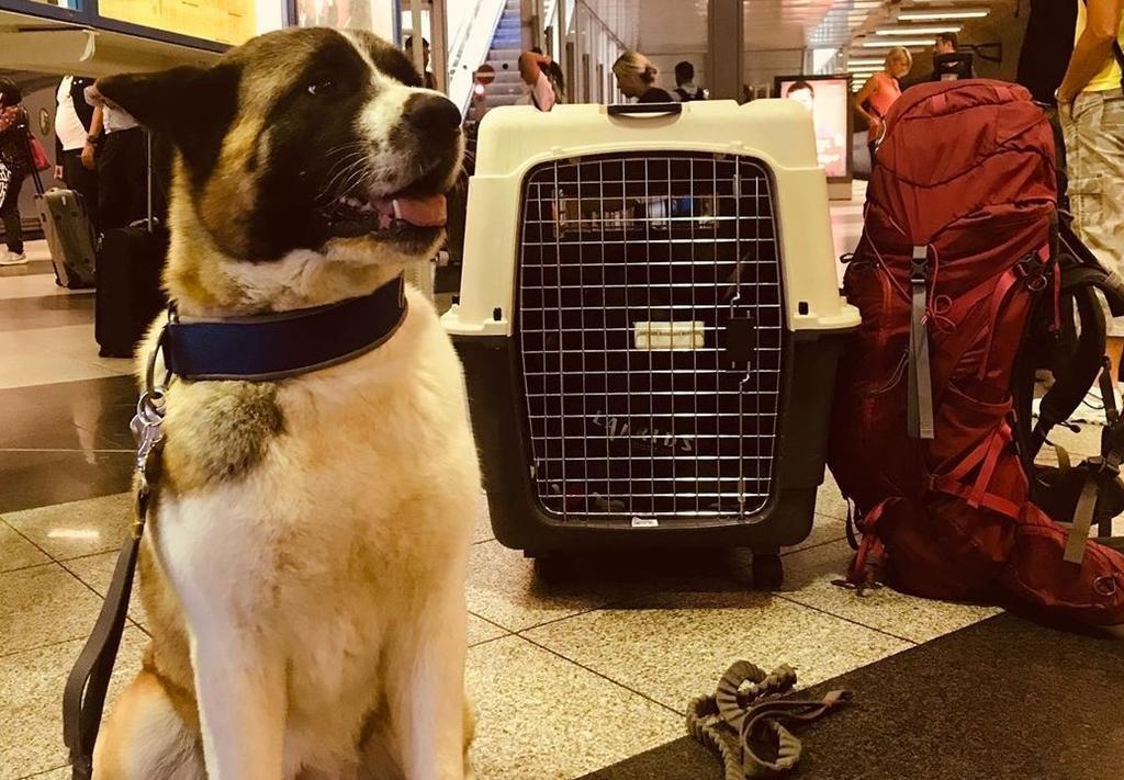 Aunque viajar en avión con mascotas es una práctica cada vez más usual, siguen existiendo puntos a considerar por la seguridad de cada uno de ellos.  (ESPECIAL)