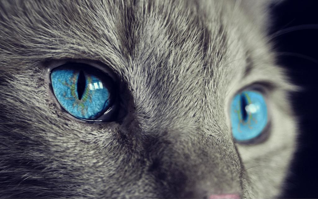 FESTEJO FELINO. Desde 2002, cada 8 de agosto se reconoce la importancia de los gatos a nivel mundial. (ARCHIVO)