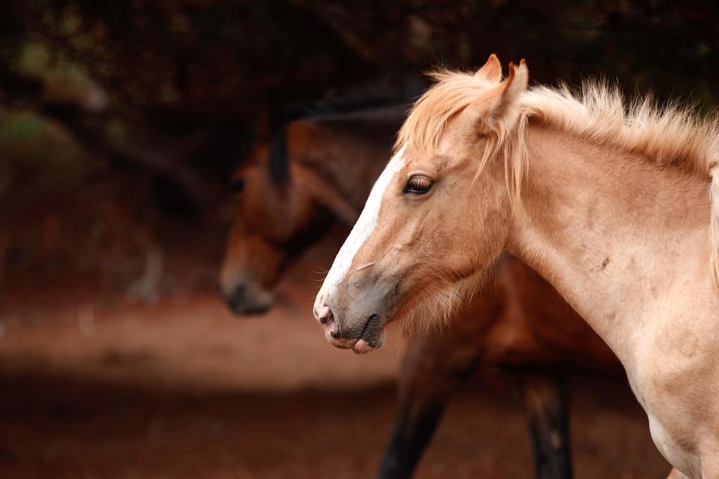 Los caballos domésticos no se habrían originado en Anatolia, como hasta ahora se ha considerado, sino que su origen más probable estaría en las regiones cercanas del Mar Negro. (ARCHIVO)