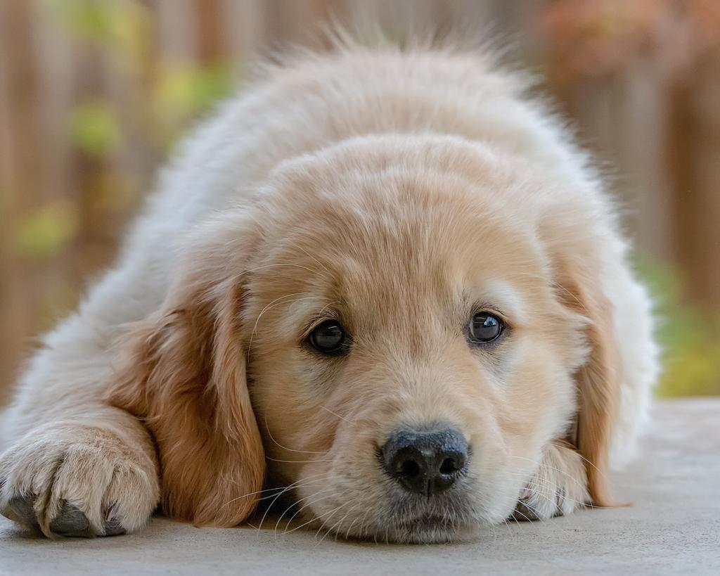 Es importante conocer ciertos datos antes de comenzar el proceso de adopción, tanto del can o felino como de los trámites. Lo primero que debes tener en cuenta los los básicos. (ESPECIAL)