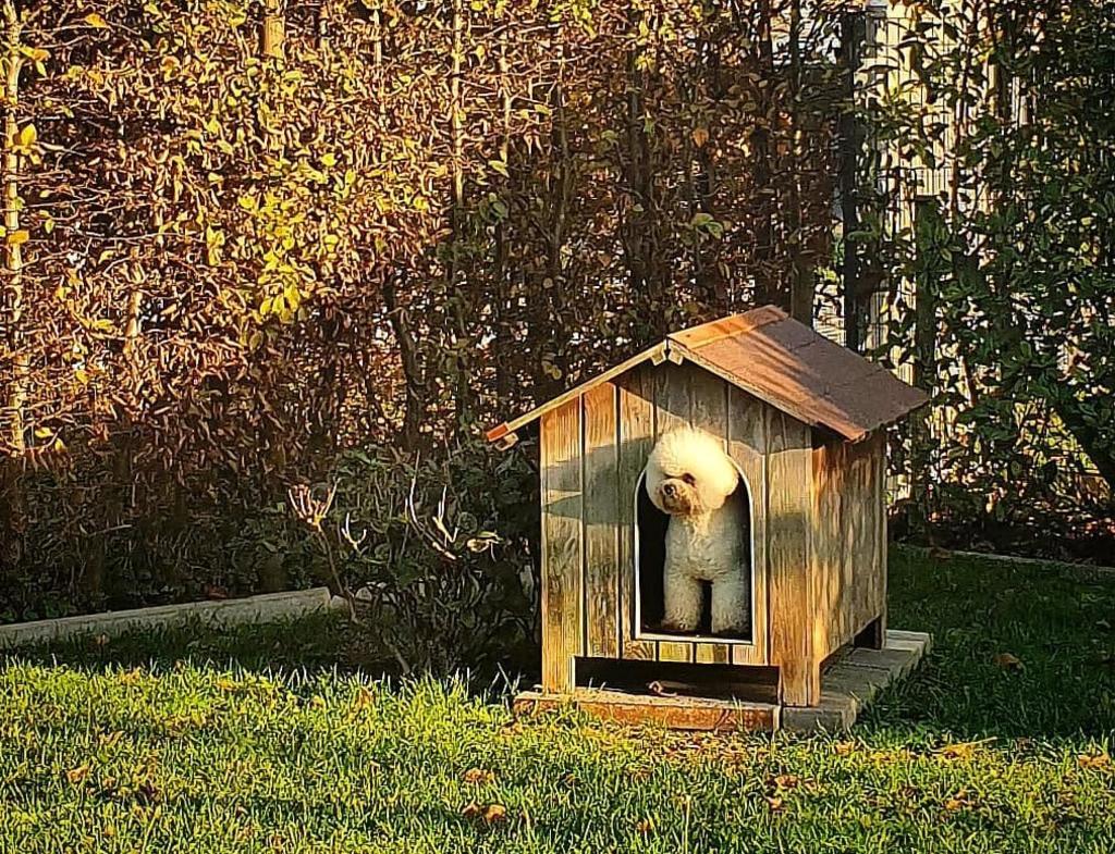 Si tu mascota tiene su propia casa en el jardín o cochera, será importante que la acondiciones durante el invierno para evitar que se humedezca causando alguna enfermedad.  (INSTAGRAM @mariskaslifewithpets)